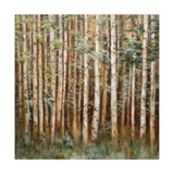 Aspen Beauty I Premium Giclee Print by Scott Lee