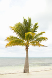 Beach Palm II Photographic Print by Karyn Millet