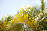 Palms at Noon Photographic Print by Karyn Millet