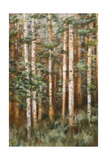 Aspen Beauty II Premium Giclee Print by Scott Lee