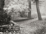 Autumn Paradise IV B&W Photographic Print by Vitaly Geyman
