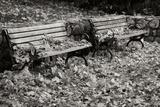 Autumn Paradise I B&W Photographic Print by Vitaly Geyman