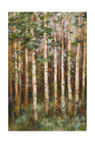 Aspen Beauty III Premium Giclee Print by Scott Lee