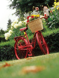 Vintage Bicycle II Photographic Print by Philip Clayton-thompson
