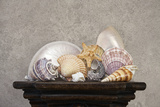 Seashell Still Life II Photographic Print by C. McNemar