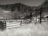 Summer Corral I Photographic Print by Scott Larson
