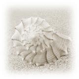 In the Sand I Fotografisk tryk af Jim Christensen