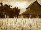 Harvest Time III Photographic Print by Scott Larson