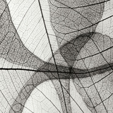 Leaf Designs III BW Photographic Print by Jim Christensen
