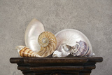 Seashell Still Life I Photographic Print by C. McNemar