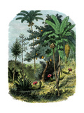 "Tropical Forest of the ""Spanish Main"" of Central America or the Caribbean Giclee Print"