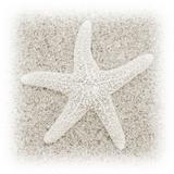 In the Sand V Fotografisk tryk af Jim Christensen