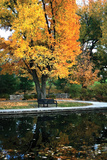 Fall in the Park Photographic Print by Tammy Putman