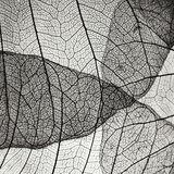 Leaf Designs IV BW Photographic Print by Jim Christensen