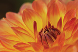 Orange Flame Photographic Print by Dana Styber