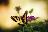 Garden Butterfly IV Photographic Print by Philip Clayton-thompson
