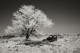 Truck and Tree Photographic Print by George Johnson