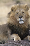 Africa's King Photographic Print by Susann Parker