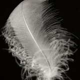 Feather IV Photographic Print by Jim Christensen