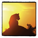 Radiant Africa 4 Photographic Print by Susann Parker