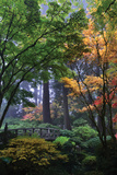 Japanese Gardens III Photographic Print by Brian Moore