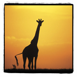Radiant Africa 1 Photographic Print by Susann Parker