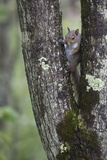 Squirreling Around Photographic Print by Susann Parker