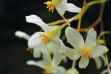 White Orchids II Fotografiskt tryck av Brian Moore