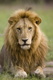 The King Photographic Print by Susann Parker