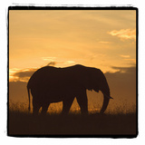 Radiant Africa 2 Photographic Print by Susann Parker