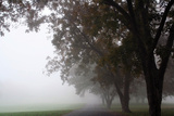 Foggy Trees III Photographic Print by Tammy Putman