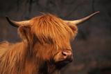 Symbolic of Scotland Photographic Print by Susann Parker