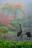 Gardens in the Fog I Photographic Print by Brian Moore