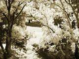 Sunlit Meadows II Photographic Print by Alan Hausenflock