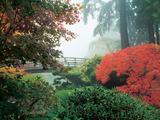Japanese Garden II Photographic Print by Maureen Love