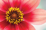 Starburst IV Photographic Print by Dana Styber