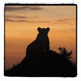 Radiant Africa 3 Photographic Print by Susann Parker
