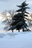 Tree in Snow II Photographic Print by Tammy Putman