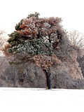 Tree in Snow I Photographic Print by Tammy Putman