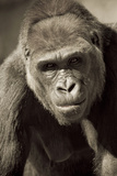 Planet of the Apes Photographic Print by Susann Parker