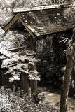 Bamboo Garden II Photographic Print by Alan Hausenflock