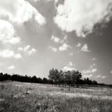 Tree Line Sq II Photographic Print by Alan Hausenflock