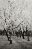 Winter's Palace VIII B&W Photographic Print by Vitaly Geyman