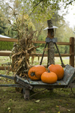 Autumn Harvest II Photographic Print by Philip Clayton-thompson