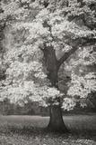 Autumn in Paris II B&W Photographic Print by Vitaly Geyman