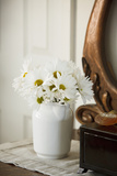 Daisy Bouquet II Photographic Print by Philip Clayton-thompson