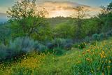 Caliente Spring I Photographic Print by Mark Geistweite