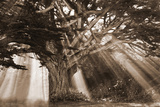 Moses Tree Photographic Print by Vitaly Geyman