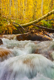 Autumn Brook Photographic Print by Mark Geistweite