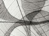 Leaf Designs I BW Fotografisk tryk af Jim Christensen